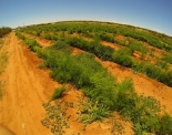 thumbs gopr0010 Austraalia loodus