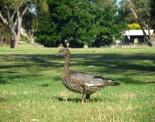 thumbs sam 3318 Austraalia loodus