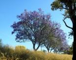 thumbs sam 3476 Austraalia loodus