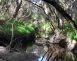thumbs sam 3488 Austraalia loodus