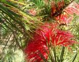 thumbs sam 3516 Austraalia loodus