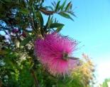 thumbs sam 3567 Austraalia loodus