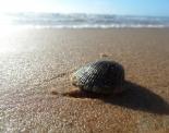 thumbs sam 4775 Austraalia loodus