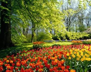 spring 7 300x240 spring 7