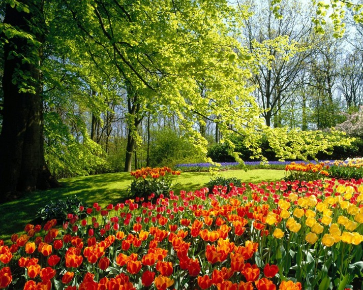 spring 7 714x571 Kevad on kiire