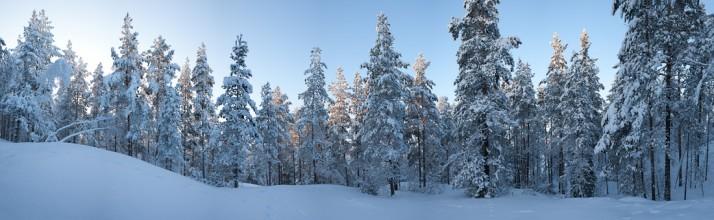 mets 714x220 Head tänast päeva! Head uut aastat!