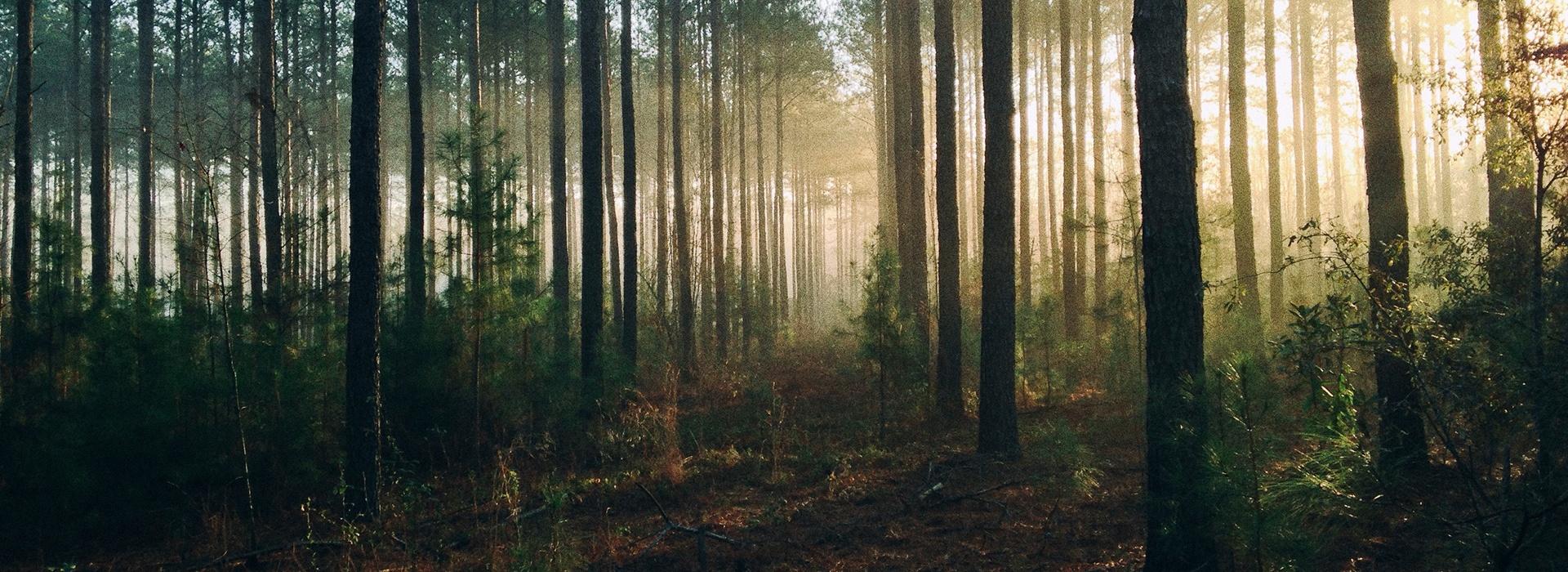 mets Taanieli raamatu õppimine