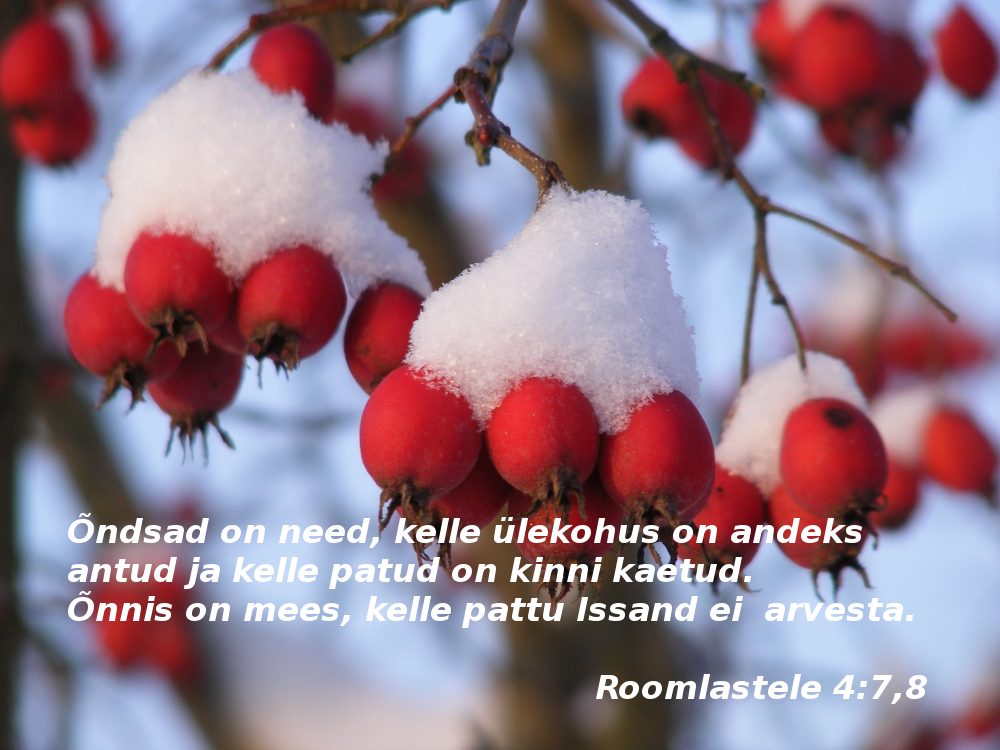 Room.47.8 Piiblisalm