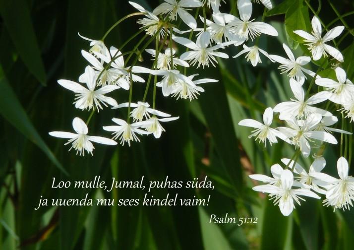 valge puhas 714x504 Kristuse mäejutlus   õndsad on puhtad südamelt