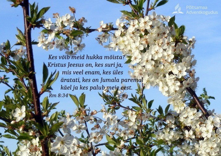 kirsiõied 17.05.2014 714x502 Piiblisalm