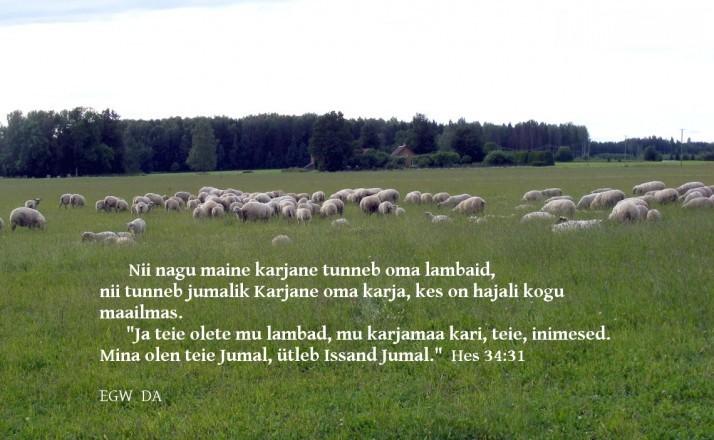 lambad
