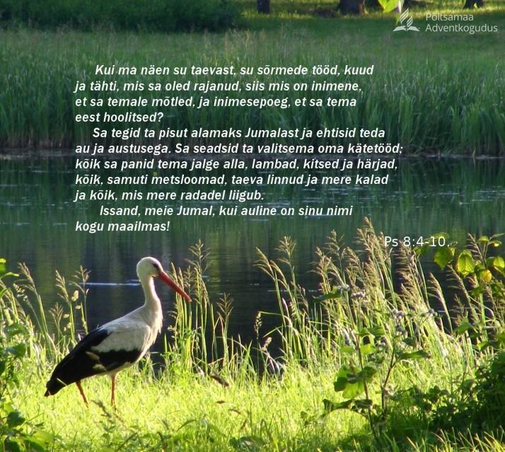 taeva linnud ja mere kalad 714x639 Piiblisalm