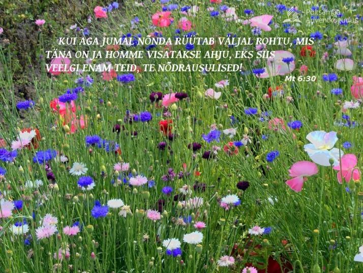 lilled väljal 714x536 Õppetund lilledest