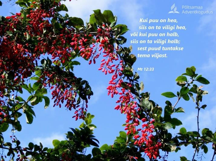 hea vili 714x533 Puud tuntakse viljast