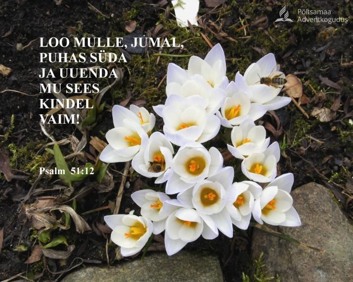 loo puhas süda  714x570 Loo mulle, Jumal, puhas süda