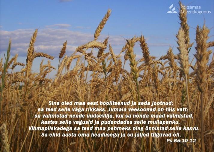 viljapõllul  714x506 Piiblisalm