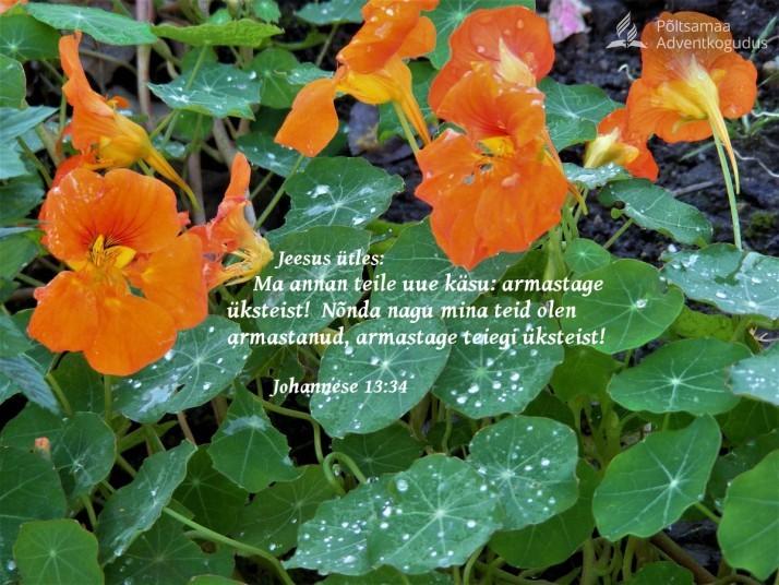 Jeesus andis uue käsu 714x536 Üksteise armastamisest